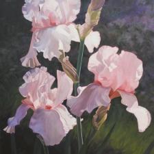 Sevier-Three-Pink-Irises-40x30