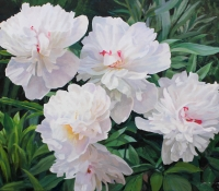White Peonies Butchard Gardens