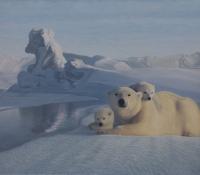 At the ice edge plolar bear
