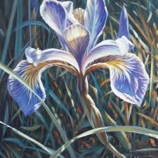 LeClerc-Iris Blues-20x16