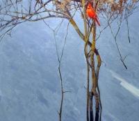 Winter - Alan Sakhavarz