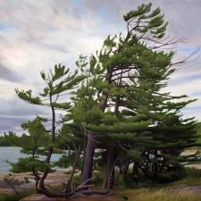 Pines_of_Killbear
